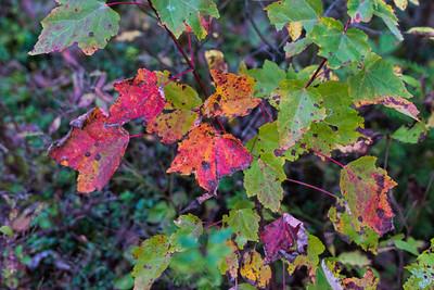20121007-Maine October-06373