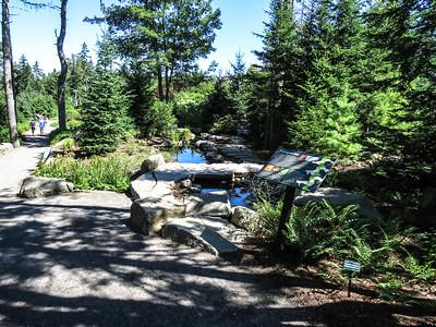 Sphagnum Bog, Botanical Gardens, Boothbay, ME