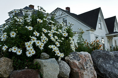 First morning walk around Prospect Harbor.  Typical Maine scenery.  Old houses with rocks and flowers.