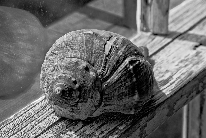 Seashell on a window in the Olson House in Cushing, Maine.