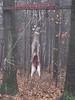 Hunt 014