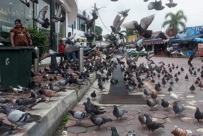 Pigeons near at the shops near Batu caves.