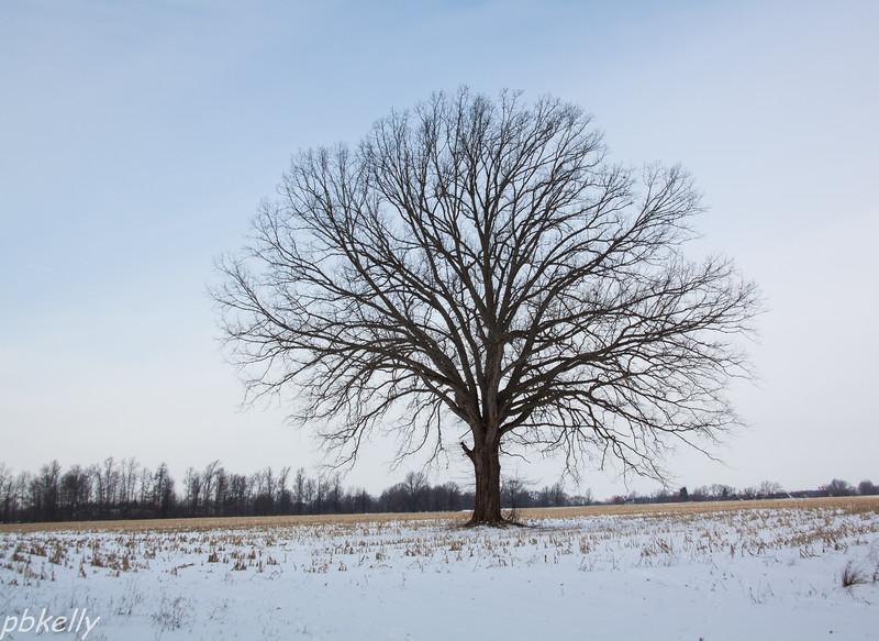 tree 013114-1.jpg