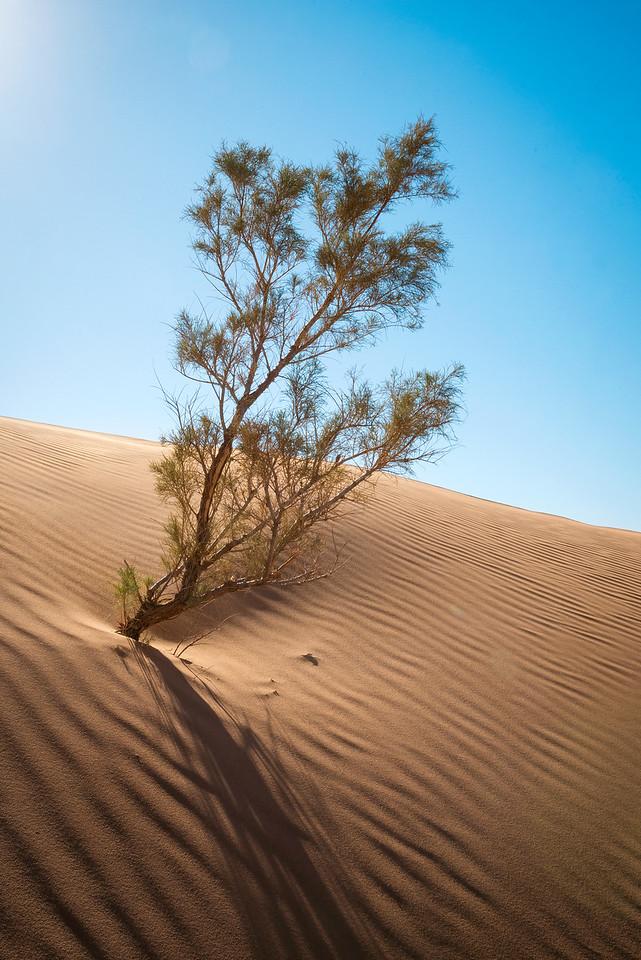 Sahara outskirts