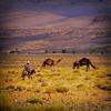 Morocco plains