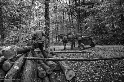 logging by horse