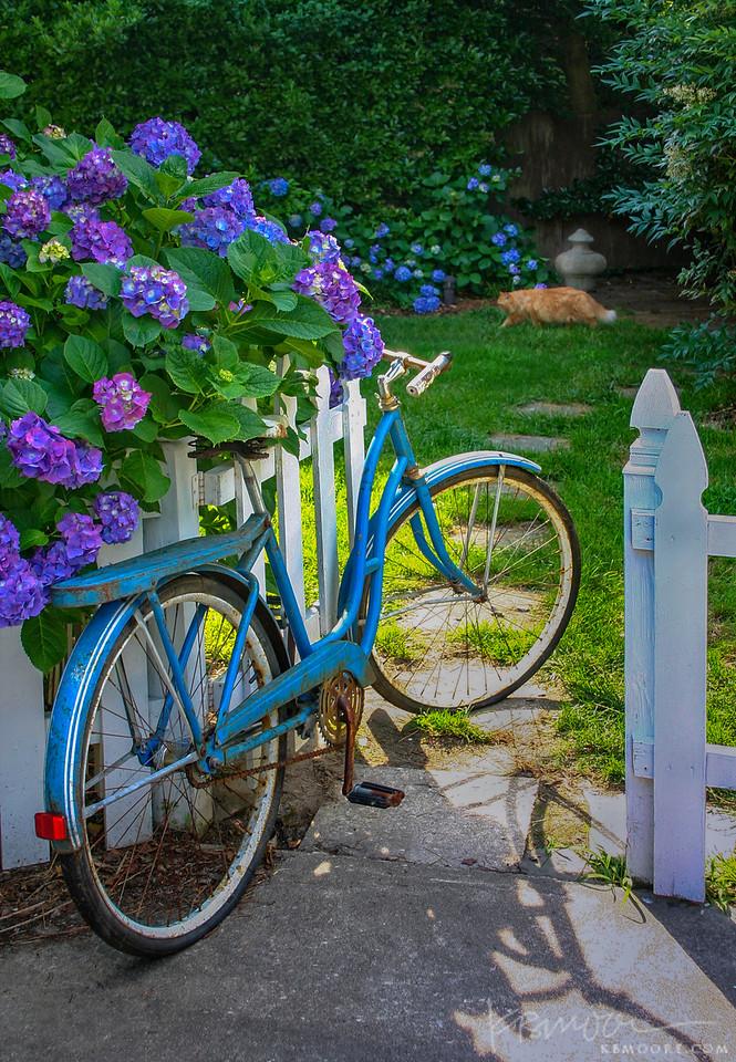 Blue Bike and Hydrangea