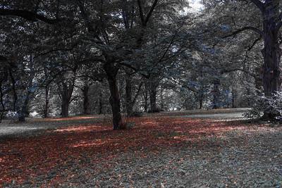 20120901. Arnold Arboretum, Boston MA.