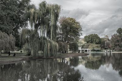 20151025.  Boston Public Garden, Boston MA.