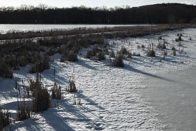 February 22 2014.  Great Meadows NWR.