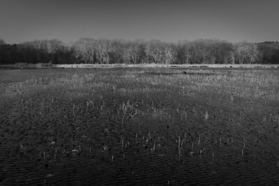 3 December 2011. Great Meadows NWR in Concord MA. View from dike across Lower Pool. Photo taken with Nikon D90 and Nikkor 24-70 mm with yellow/orange filter (040M). Photo processed with Nik Silver Efex Pro 2 and Adobe Photoshop CS5.