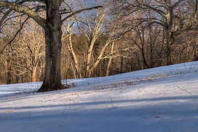 20120304 Maudslay State Park, MA