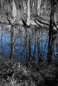 21 April 2013.   Oxbow National Wildlife Refuge, MA.