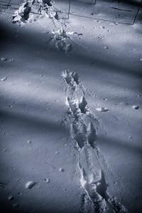 3 January 2014.  Animal tracks at Oxbow NWR.