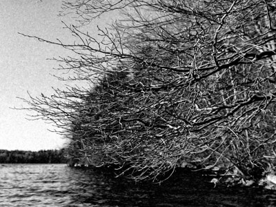 20120318. Kayaking under some branches on Whitehall Reservoir, Hopkinton MA.