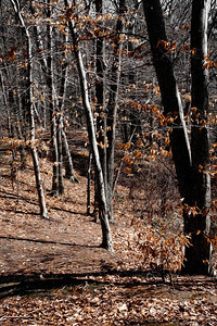 20120318. Woods on island in Whitehall Reservoir, Hopkinton MA.