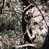 Web Encased Branches