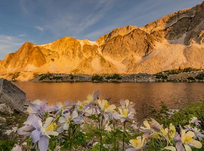 Lookout Lake Columbine