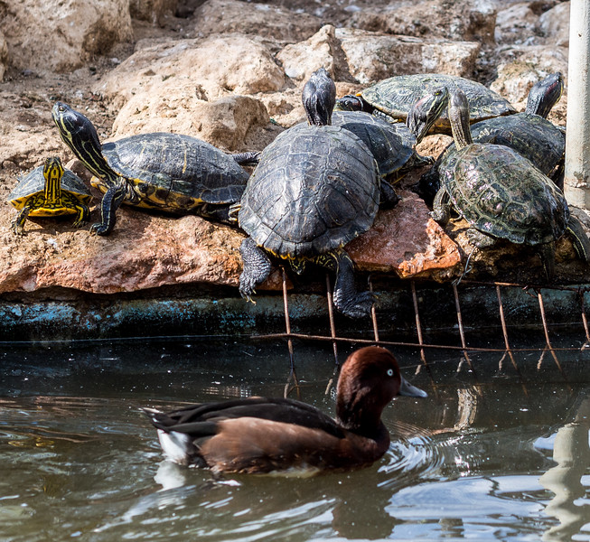 Turtles in Melios Zoo