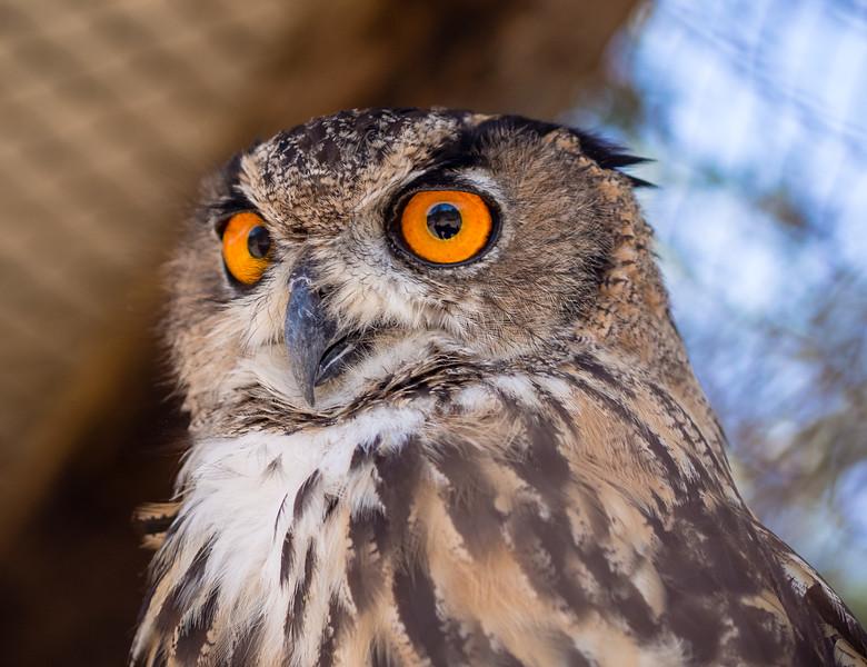 Surprised owl in Melios Zoo