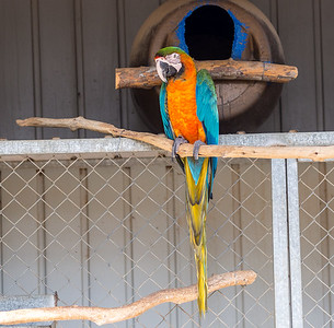 A parrot in Melios Zoo