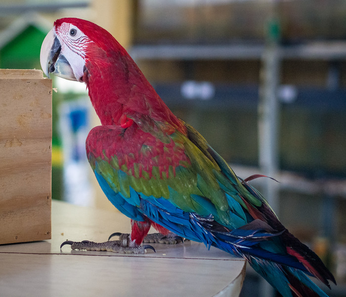 Ara parrot in Melios Zoo