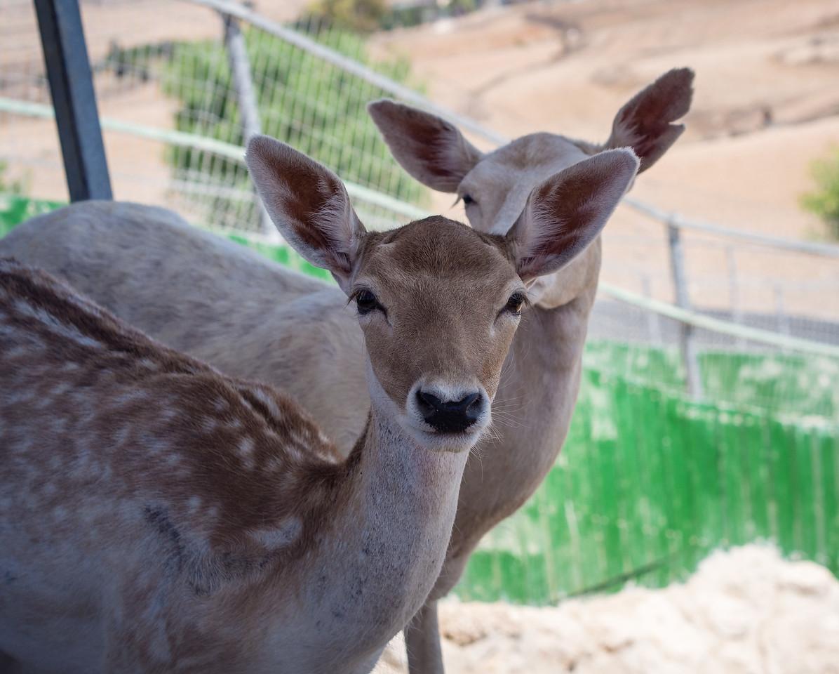 Deers in Melios Zoo