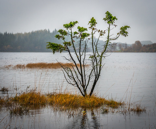 Rain moved the tree into the lake