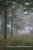 Stockhill, misty morning Mendip Landscape
