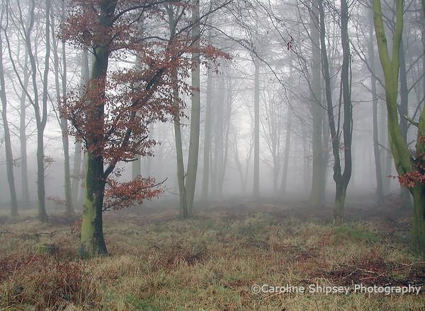 Stockhill in winter mist Mendip Landscape