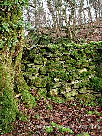 Mendip wall in Long Wood reserve Mendip Landscape