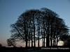 Mendip Trees at dusk in winter Mendip Landscape