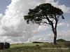 Mendip Tree Mendip Landscape