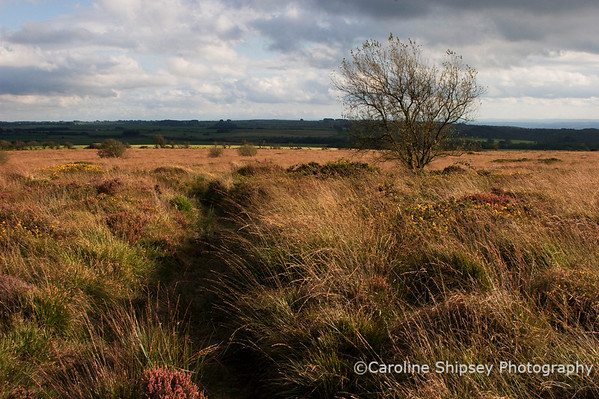 Looking south on Blackdown Mendip Landscape