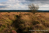 Looking south on Blackdown Mendip Landscape