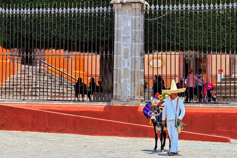 Man and his Donkey, San Miguel De Allende Mexico
