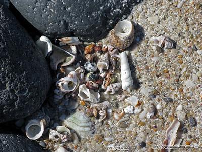 Shells at Mirador beach , Puerto Penasco, Mexico.