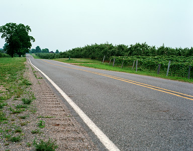 Grape and Pear Fields, County Road 652