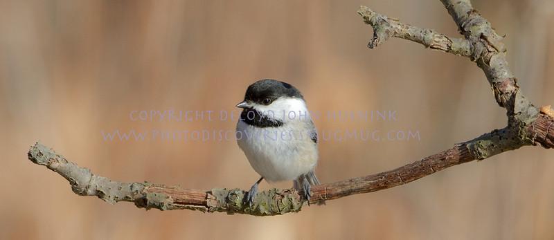Birds15March 04, 2010D. John Huenink5184 x 3456