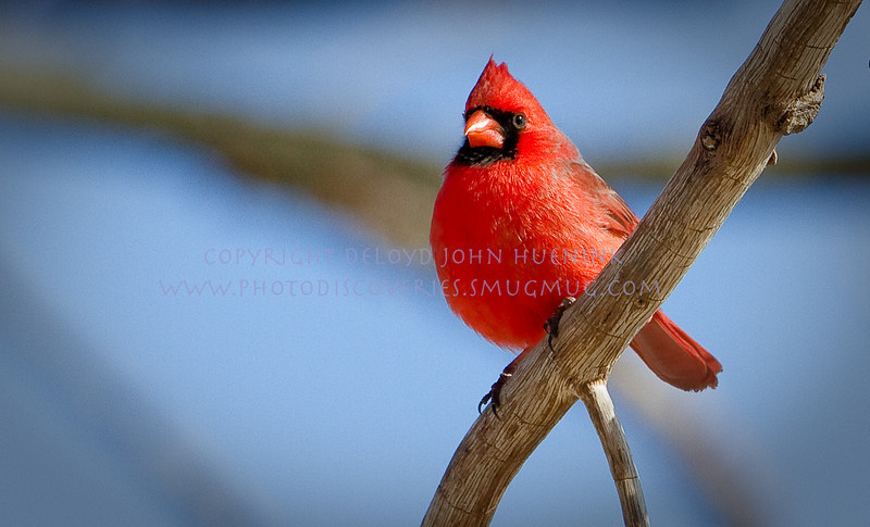 Birds7March 04, 2010D. John Huenink5184 x 3456