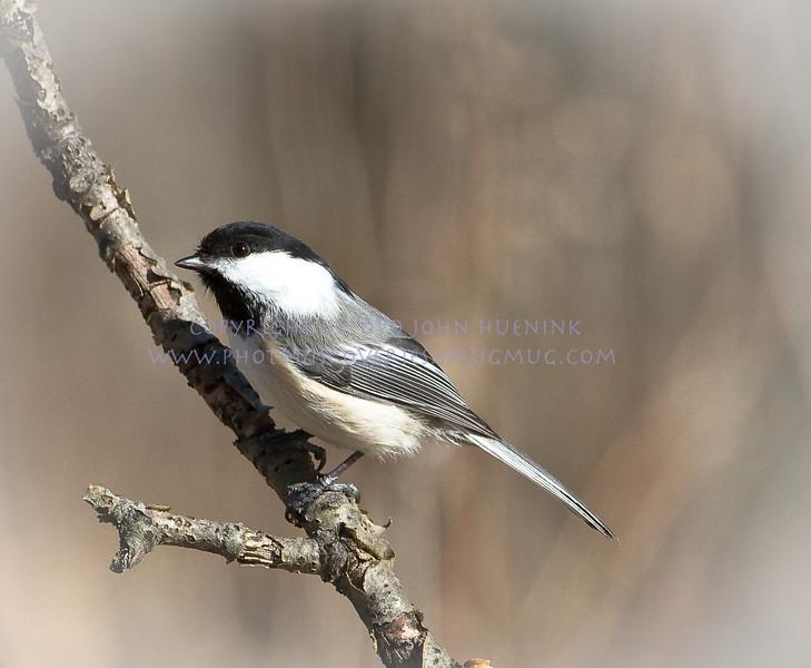 Birds13March 04, 2010D. John Huenink5184 x 3456