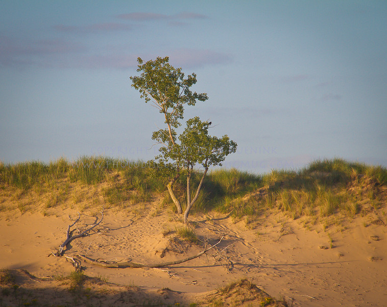 Saugatuck Dunes near Oval Beach