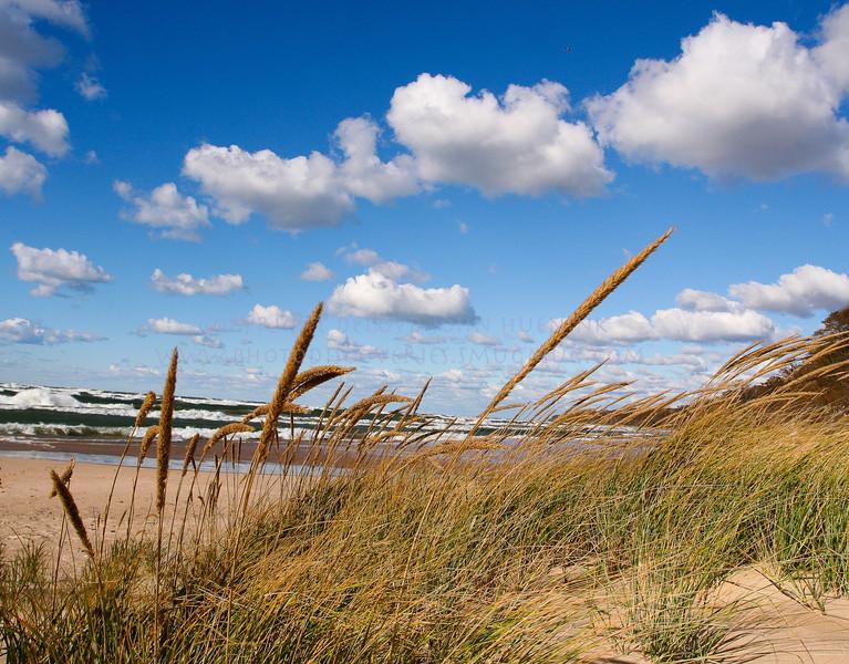 Dune Grass, Saugatuck