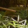 Sigma 28-70mm f/2.8 EX ASP DF , Micke Grove