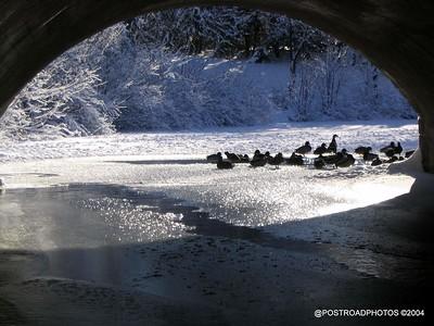 postroadphotos-places-usa-milford-connecticut-winter-scene-2004-017
