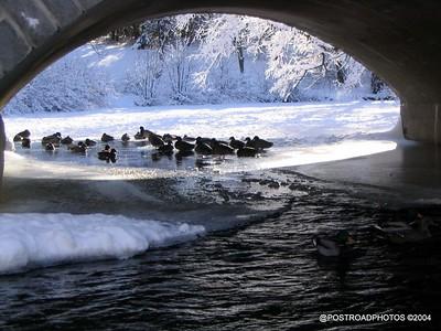postroadphotos-places-usa-milford-connecticut-winter-scene-2004-016