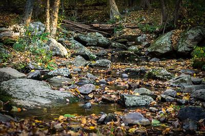 Shenandoah Stream 2016