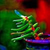 Christmas Cactus