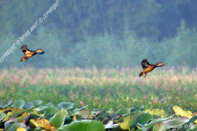 Sep 18, 2007 - Ducks over the Endville Watershed