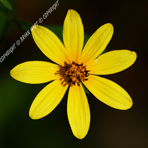 IMG_9135b Flower